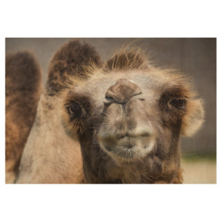 Bactrian camel wood poster