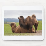 Bactrian Camels Mouse Pad