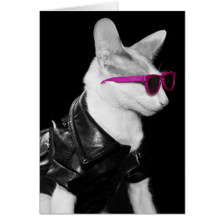 Bad Boy Cat in Shades Cards
