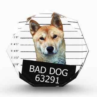 Bad dog acrylic award