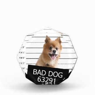 Bad dog award