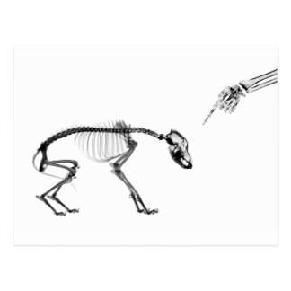 Bad Dog X-Ray Skeleton in Black & White Postcard