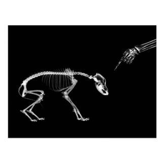 Bad Dog X-Ray Skeleton in Black & White Post Card