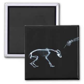 Bad Dog Xray Skeleton Black Blue 2 Inch Square Magnet