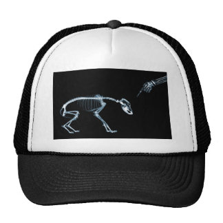 Bad Dog Xray Skeleton Black Blue Trucker Hat