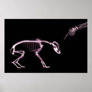 Bad Dog Xray Skeleton Black Pink Poster