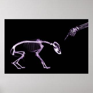 Bad Dog Xray Skeleton Black Purple Poster