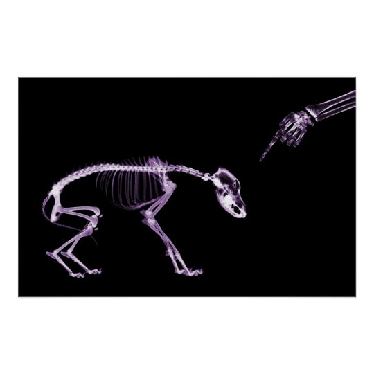 Bad Dog Xray Skeleton Black Purple Poster
