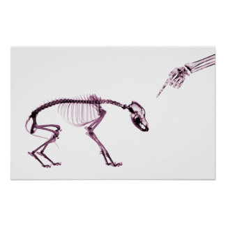 Bad Dog Xray Skeleton White Pink Poster