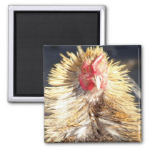 Bad Feather Day Magnet