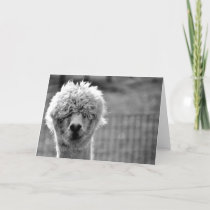 Bad Hair Day - Alpaca Card