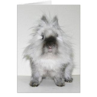 Bad hair day bunny card