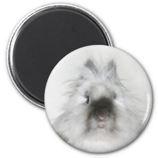 bad hair day bunny magnet