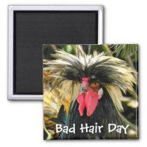 Bad Hair Day Chicken Magnet