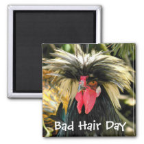 Bad Hair Day Chicken Photo Magnet