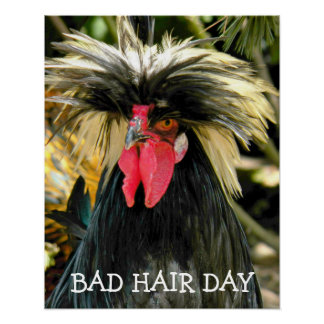 Bad Hair Day Chicken Poster