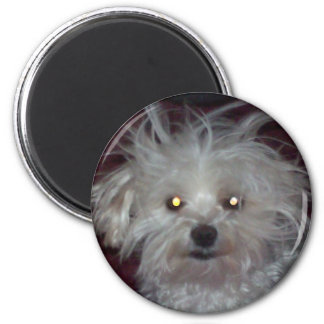Bad Hair Day - Dog and People Humor Magnet