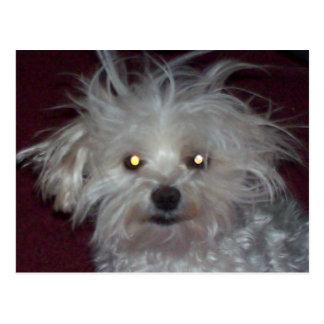 Bad Hair Day - Dog and People Humor Postcard