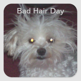 Bad Hair Day - Dog and People Humor Square Sticker