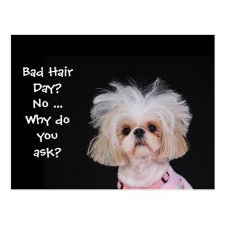 Bad Hair Day? Postcard
