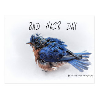 Bad Hair Day Postcards