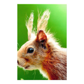 Bad hair day squirrel stationery