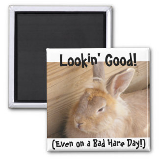 Bad Hare Day Magnet