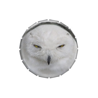 Bad tempered Snowy owl Jelly Belly Tins