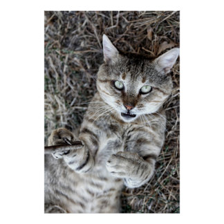 Badass Cat Print