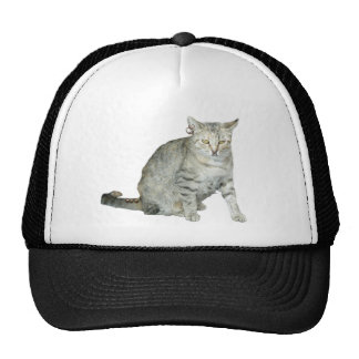 Baddass Cat Ballpark Cap