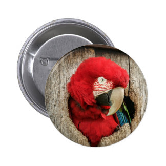 Badge green wing macaw red parrot in barrel button