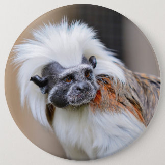 Badge with Cotton-top Tamarin monkey Button