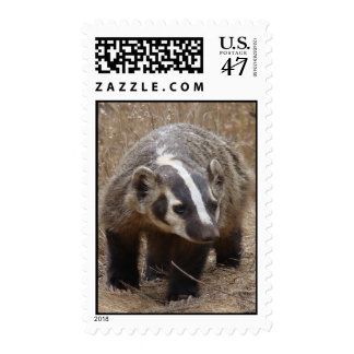 Badger Approach Stamp