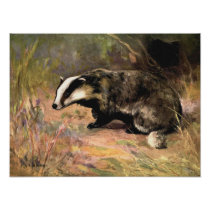 Badger by CE Swan, Vintage Forest Animals Poster