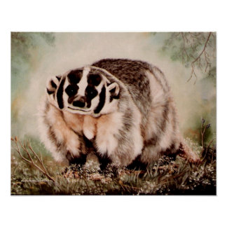 Badger canvas poster