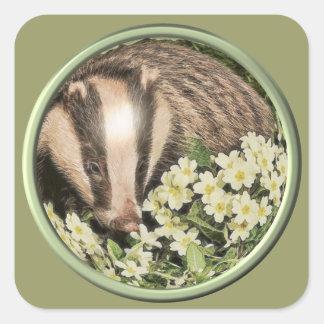 Badger on the Primrose Bank Square Sticker