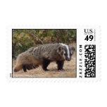 Badger Stamp