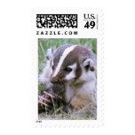 Badger Stamps