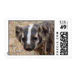 Badger Staredown Stamp