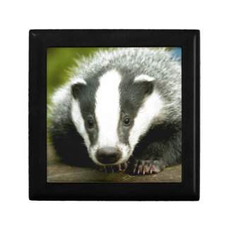 Badger - Stunning pro photo! Keepsake Boxes