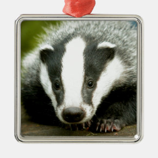 Badger - Stunning pro photo! Metal Ornament