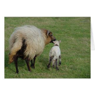 Badgerface Ewe with lamb Card