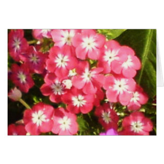 Badrinath Valley of Flowers 1 Greeting Card