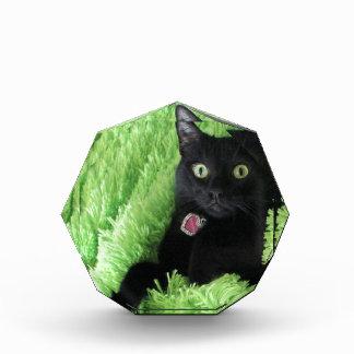 Bagheera the Black Cat Award