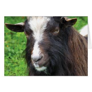 Bagot Goat   Blank Card