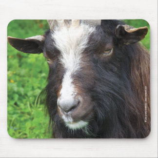 Bagot Goat   Farm Animal Mouse Pad
