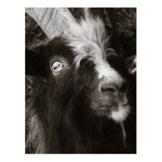 Bagot Goat Portrait Old Style - Animal Photography Postcard