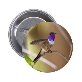 Bahama Woodstar Hummingbird Pins