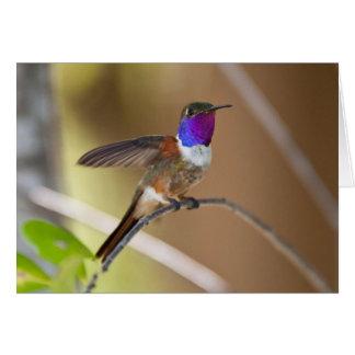 Bahama Woodstar Hummingbird Card