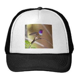 Bahama Woodstar Hummingbird Trucker Hat